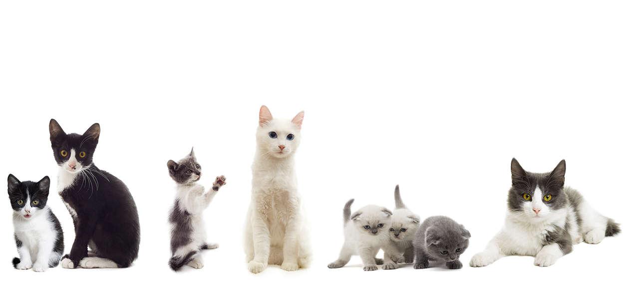 Katzenstreu Test Vergleich