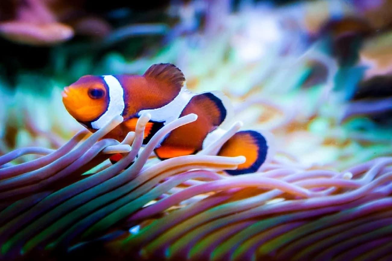 LED Aquarium Beleuchtung