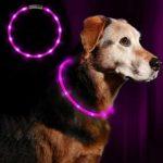 zum Angebot Hunde Leuchthalsband Anicoll LED Halsband