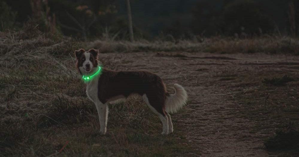 Hunde Leuchthalsband